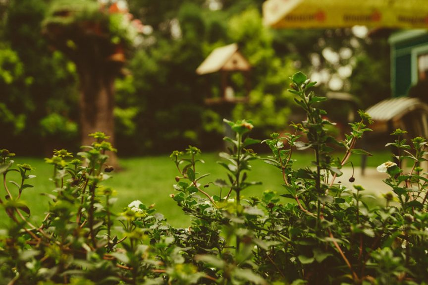 Get Rid Of Mosquitoes In The Yard Naturally