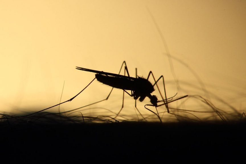 Why Are Mosquitoes Attracted To Me